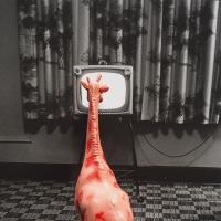 223_giraffa.jpg