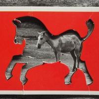 223_horse.jpg
