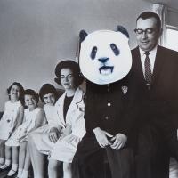 223_panda2.jpg